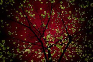 Granate Red