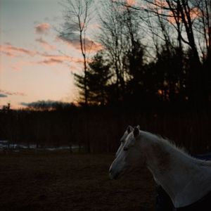 Gilmanton, N.H. © Matt Nighswander