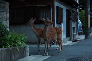 Early Morning in Nara © Yoko Ishii