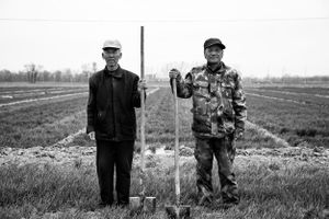 Two old people in the field