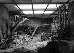 Habitat X