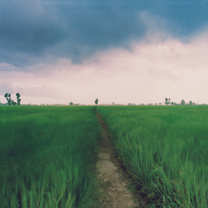 Flatland A Landscape of Punjab