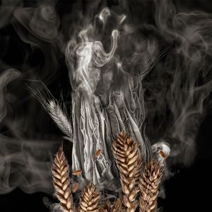 Wheat Sprout on Fire
