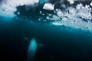 Beneath The Ice © Krystle Wright, Australia