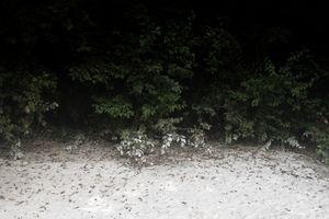 Beach n.1