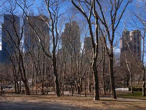Winter Tree View
