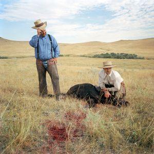 Dead calf, Padlock Ranch, Montana