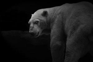 Animal (42). 2008.