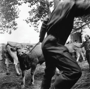 Cattle Fair. Garris.