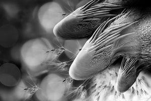 Dragon Grass Seed