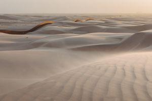 Sand Dragon, Algodones Dunes, California