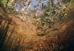 Big Cypress Pollen
