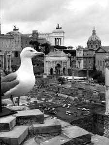 Gabbiano sul foro romano