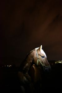 Young horse, 2016