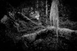 Deep dark forest 1