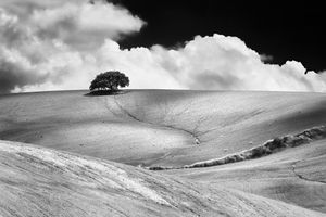 One tree on the hill