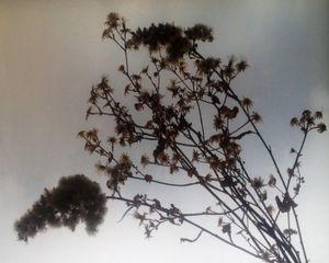 winterbloom - baby's breath I