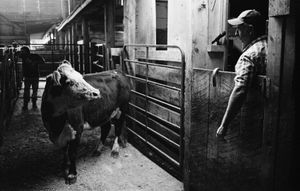 Cattle Callers-06