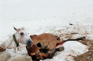 Dead Horse and Survived Horse © Dmitry Gomberg