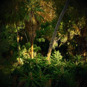 Jungles 04 © Olivia Lavergne