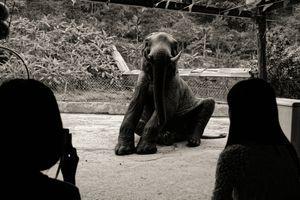 An elephants tale