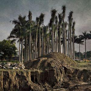 Transient Landscape # 8