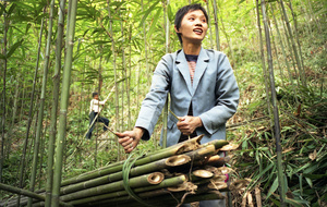 A female worker secures a load of bamboo - Guangdong province, China.