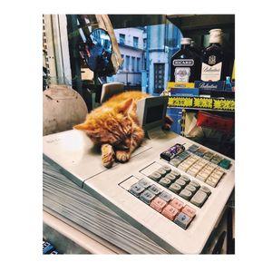 CUTE CAT CASHIER