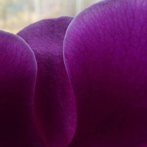 wild flower 6