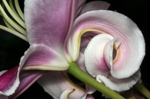 Lily 2017-1