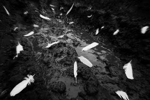 Feathers on the ground / Russia, Samara, 2013