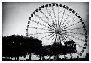 Trees and Ferris Wheel.