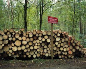 Białowieża Forest / Białowieża, Podlasie Voivodeship