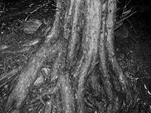 Inner Forest VIII