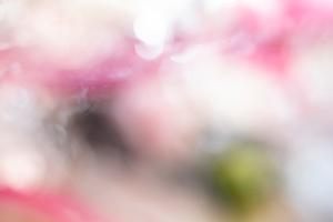 Flower For Fragility- Flower bloomed one day Ⅰ