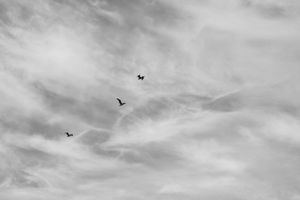 Three little birds on a cloudy day