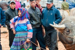 Flower Hmong woman selling livestock