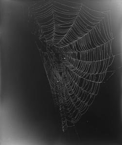 11.Web Study #5. Unique gelatin silver photogram. 24x20 inches, 2013