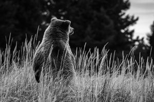 Where's that Cub Now?