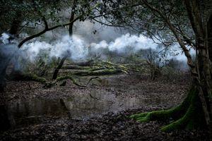 Between The Trees 9 © Ellie Davies