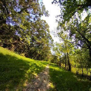 Louisiana Cypress Swamp Path