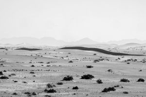 The Wall - Sonoran Desert