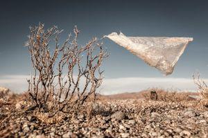 Plastic Tree #20