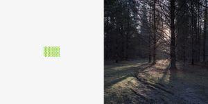 'Plantation, softwood'.
