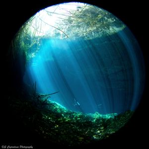 Rays of light fill the frame as light filters through the ;ush forest into the dark of a cenote. Yucatan, Mexico.