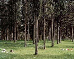 Cypresses (soldiers), Birya, 2013