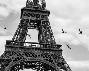 Eiffel Birds