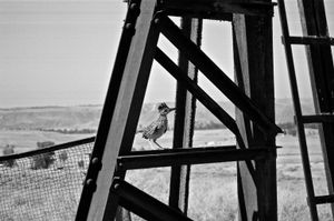 On the Abandoned Pump Jack