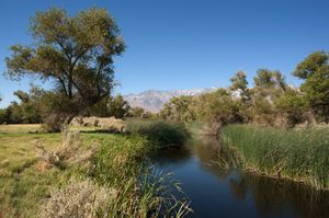 Lower Owens River Restoration Project, Owens Valley, CA