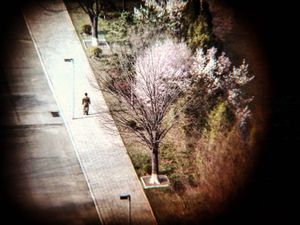 29.04.2017 Pyongyang, North Korea.